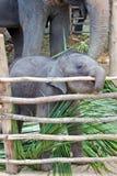 滑稽婴孩的大象 免版税图库摄影