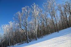 滑雪倾斜结构树 库存照片