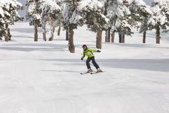滑雪在一个美好的雪森林风景 滑雪雪体育运动跟踪冬天 免版税库存图片