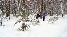 滑雪在冬天森林里的人们 股票录像