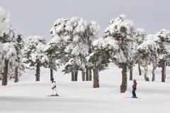 滑雪在森林倾斜 白色山风景 冬天 库存照片