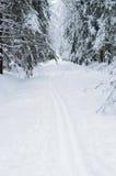 滑雪多雪的线索森林 免版税库存图片