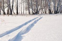 滑雪线索森林 库存照片