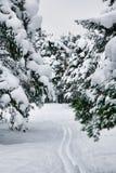 滑雪线索 免版税库存图片