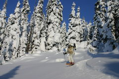 滑雪结构树 库存图片