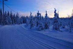 滑雪足迹在冬天拉普兰,芬兰 免版税库存图片