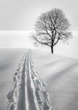 滑雪跟踪结构树 免版税图库摄影