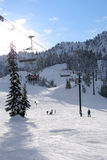 滑雪 免版税库存照片