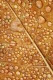 满地露水的叶子 库存图片