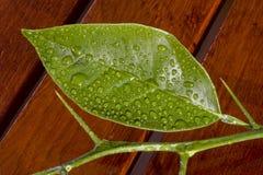 满地露水的绿色叶子木头 库存照片
