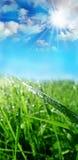 满地露水的草 库存图片