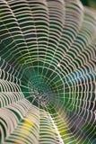满地露水的蜘蛛网 免版税库存照片