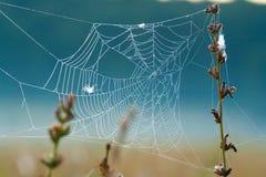 满地露水的蜘蛛网 图库摄影