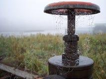 满地露水的spiderweb 库存图片