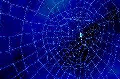 满地露水蓝色的蜘蛛网 库存照片