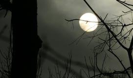 满月在有薄雾的黑暗的森林里 免版税库存照片