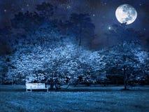 满月晚上公园 免版税库存照片