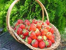 满篮草莓 免版税库存图片