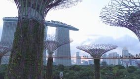 滨海湾公园和小游艇船坞海湾沙子的鸟瞰图超级树树丛在新加坡 射击 公园的顶视图 库存图片