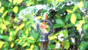 滴下慢动作板转器喷水隆头喷管控制的流动的水种植在被弄脏的绿色树背景 股票录像