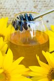 滴下的蜂蜜和向日葵 库存图片