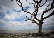 漂泊木头海滩 库存照片
