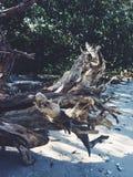 漂泊木头 库存照片