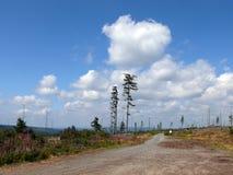 漂泊森林在捷克 免版税库存图片