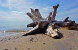 漂流木头、天空、水和沙子 图库摄影
