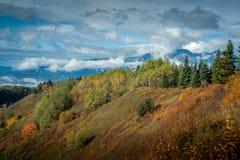 漂流木头倾斜-在秋天的被覆盖的天空下 免版税图库摄影
