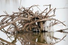 漂流木头和冰 免版税库存图片