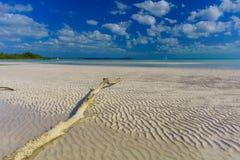 漂流木头和沙子波纹,热带海滩 免版税库存图片