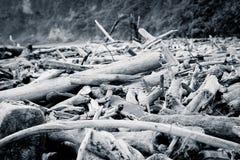 漂流木头在海滩,被处理的颜色洗涤了  免版税库存照片