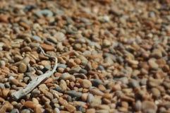 漂流木头小卵石 免版税库存照片