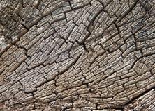 漂流木头树桩纹理 库存图片