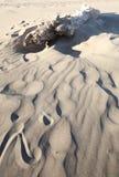 漂流木头沙子 免版税库存图片