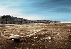 漂流木头沙子 免版税图库摄影