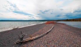 漂流木头注册小地峡在黄石国家公园-怀俄明美国告诉了Hard Road跟随在Yellowstone湖银行  库存图片