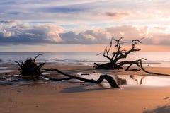 漂流木头海滩在乔治亚 免版税库存图片