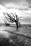 漂流木头海滩 免版税库存照片