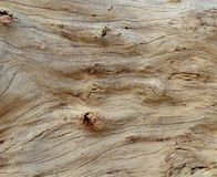 漂流木头背景 免版税库存照片