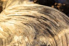 漂流木头-详细的关闭的背景与被定义的纹理的一个年迈的树节 免版税库存照片