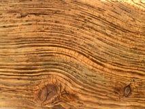 漂流木头 库存图片