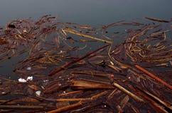 漂流木头、海带和废弃物浮游物木筏在镇静绿浪 免版税库存图片