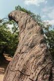 漂流木头和天空 免版税库存图片