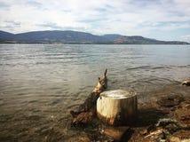 漂流木头和树桩在湖岸 库存照片