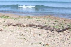 漂流木头和波浪 免版税图库摄影