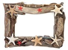 漂流木头和海星框架 库存照片