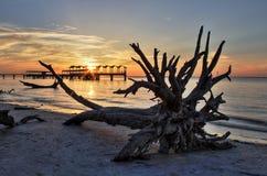 漂流木头和渔码头 免版税库存照片