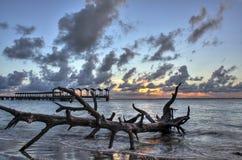 漂流木头和码头 库存图片